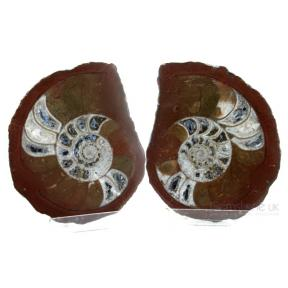 Ammonite, Various Pair 8 - 10 cm