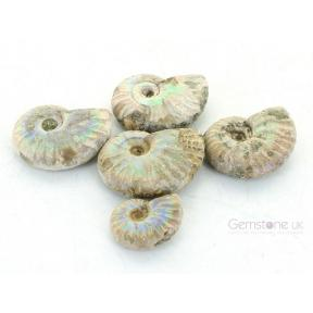 Opalized Ammonite - 2