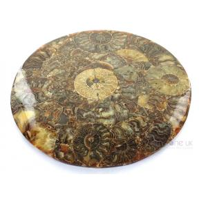 Ammonite Disc