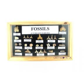 Fossil Wood Display Set
